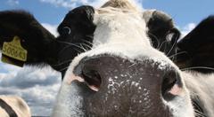 allergen-free-cow-milk.jpg